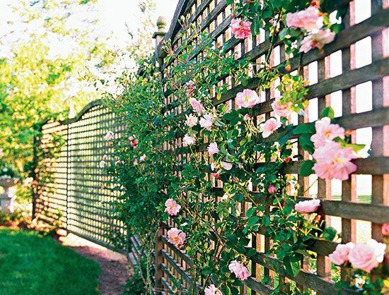 решетчатый и розовый забор