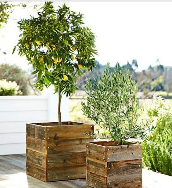 modern rustic planters