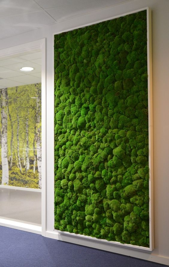 indoor moss wall
