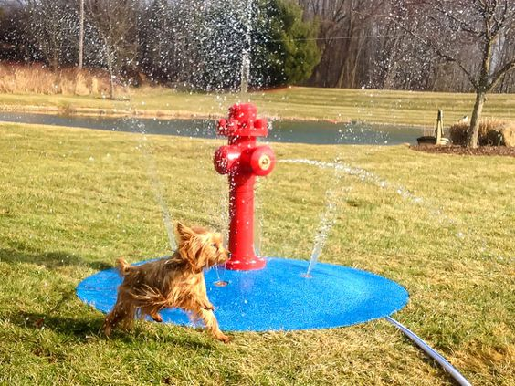 mini waterpark for pets