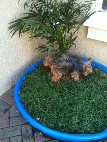 dog grass patch
