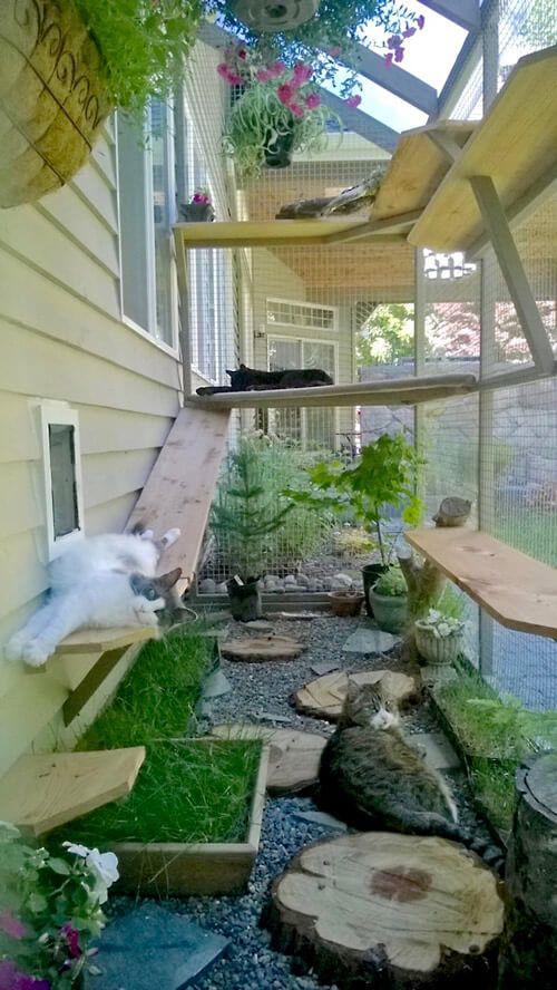 cats in catio
