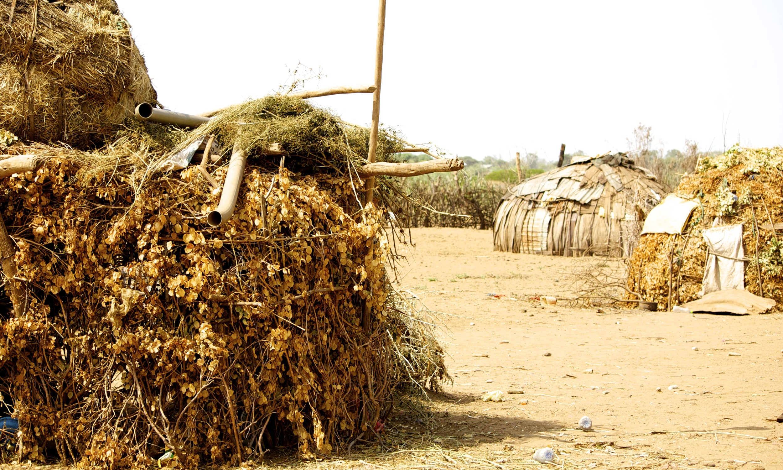 Homes of the Daasanach Tribe