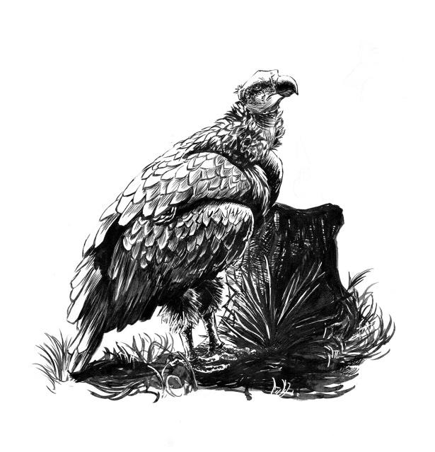 Vulture_SquareSpace