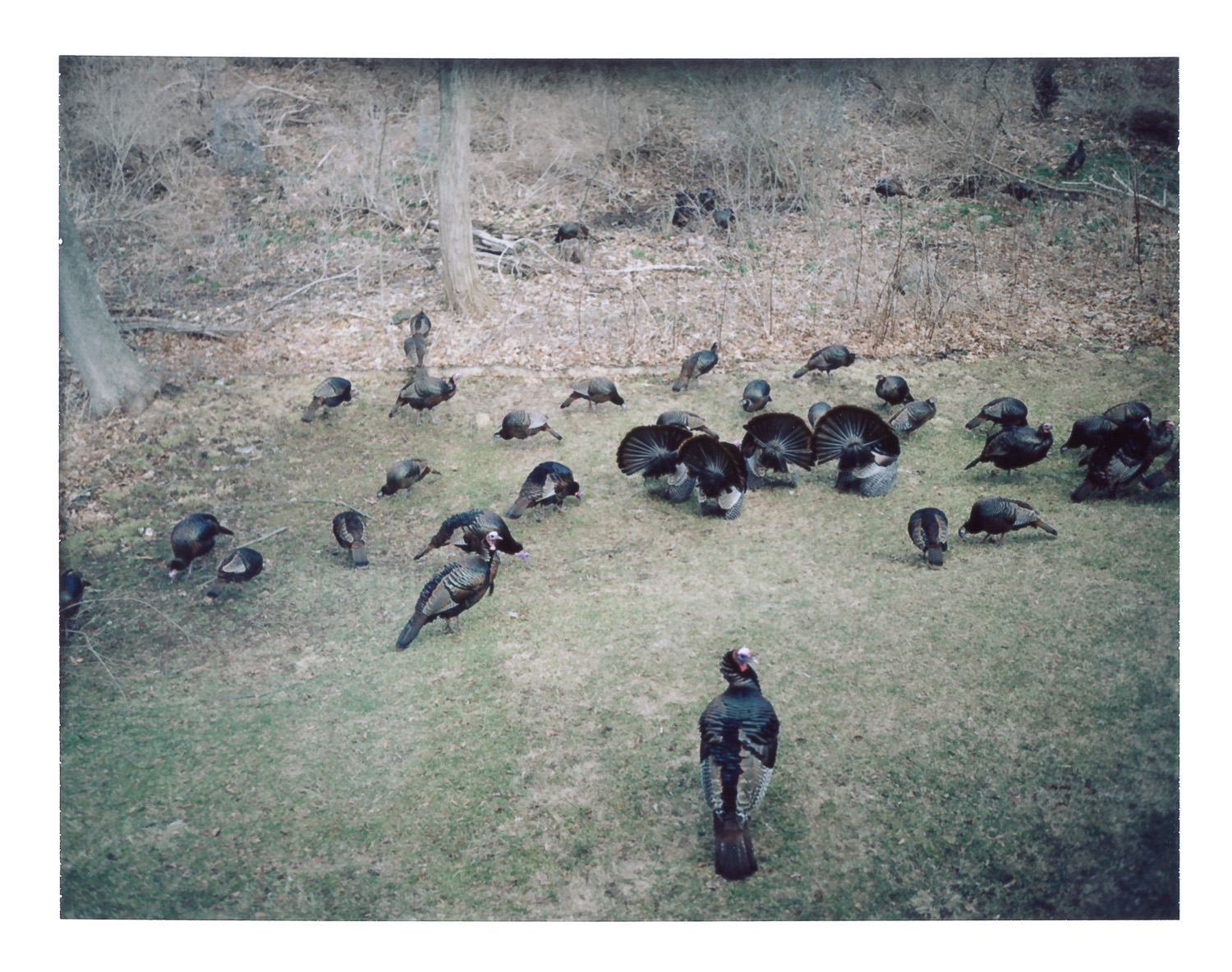 Backyard Turkey Convention