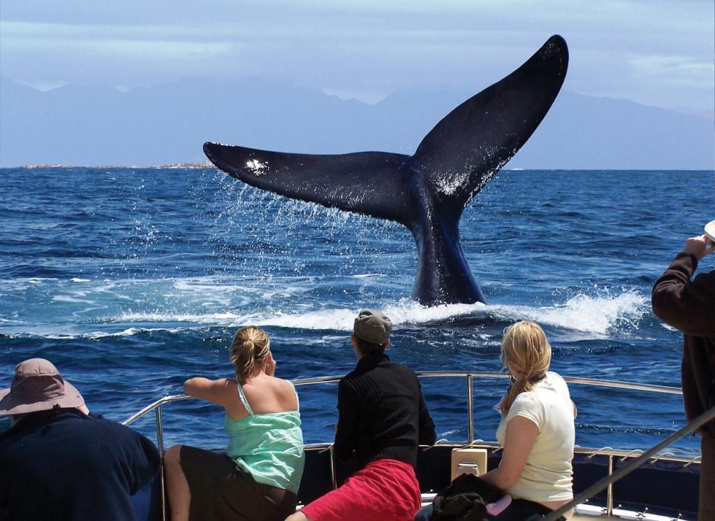 Whale-Watching in africa.jpg