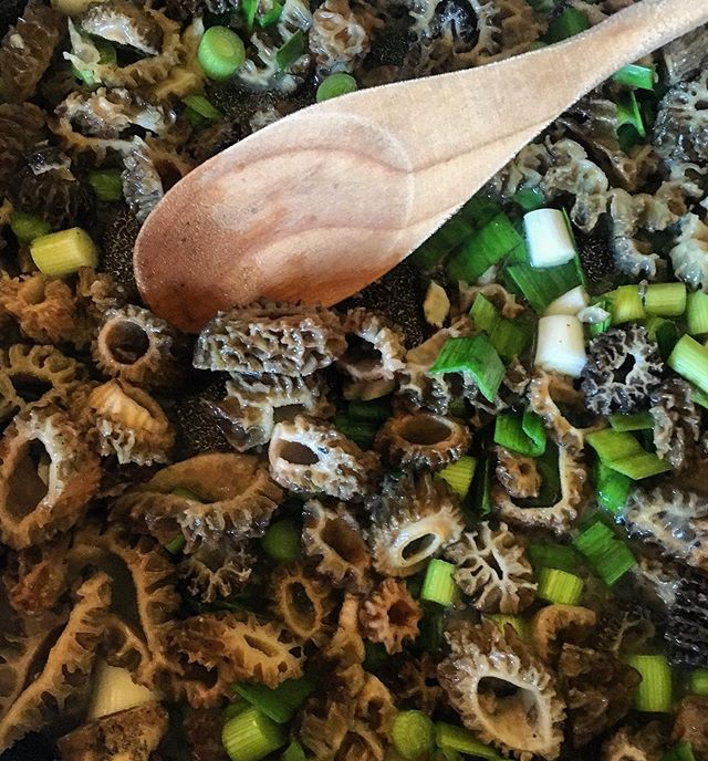 Morels and green garlic sautéed in olive oil and butter and enhanced with a bit of freshly ground sea salt and pepper! So simple and soooo tasty!! 😋 . #morels #greengarlic #foragedfood #vegetables #fruit #produce #local #okanagan #southokanagan #farmlife #organics #organicproduce #exploreokanagan #similkameen #similkameenvalley #farmfresh #farm #explorebc #imagesofcanada #fruit #buylocal #farmingandstuff #harvestseason #localfood #harvest #cawstonbc #organiccapitalofcanada