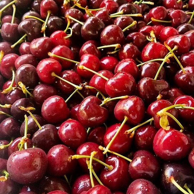 Cherries!!! So unbelievably tasty 😋🍒These beauties are from Celeste organic cherries from vialo orchard 👍Thx @vialoveapples ☺️ . #cherries  #fruit #produce #local #okanagan #southokanagan #farmlife #organics #organicproduce #exploreokanagan #similkameen #similkameenvalley #farmfresh #farm #explorebc #imagesofcanada #fruit #buylocal #farmingandstuff #harvestseason #localfood #harvest #cawstonbc #organiccapitalofcanada