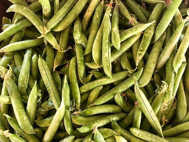 Tis the season for English peas! 😋 . #peas #englishpeas #vegetables #fruit #produce #local #okanagan #southokanagan #farmlife #organics #organicproduce #exploreokanagan #similkameen #similkameenvalley #farmfresh #farm #explorebc #imagesofcanada #fruit #buylocal #farmingandstuff #harvestseason #localfood #harvest #cawstonbc #organiccapitalofcanada