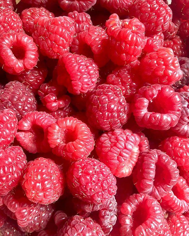 It's raspberry season!! Around here that means some jam is getting made so we can enjoy them all winter 😁 . #raspberries #raspberryjam #fruit #summer #explorekelowna #produce #local #okanagan #southokanagan #farmlife #organics #organicproduce #exploreokanagan #similkameen #similkameenvalley #farmfresh #farm #explorebc #imagesofcanada #fruit #buylocal #farmingandstuff #harvestseason #localfood #harvest #cawstonbc #organiccapitalofcanada