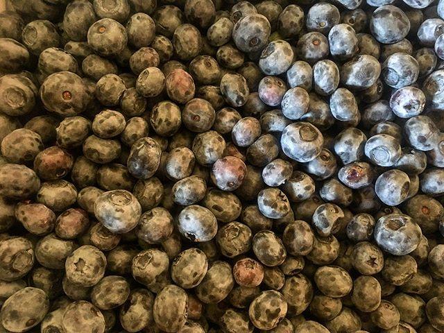 It's blueberry season!!! Order yours today! 😋 . #blueberries #fruit #produce #local #okanagan #southokanagan #farmlife #organics #organicproduce #exploreokanagan #similkameen #similkameenvalley #farmfresh #farm #explorebc #imagesofcanada #fruit #buylocal #farmingandstuff #harvestseason #localfood #harvest #cawstonbc #explorebc
