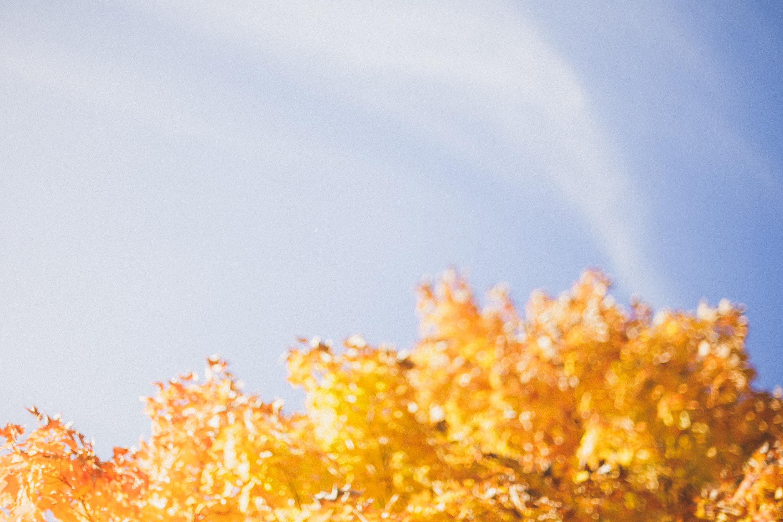 1510 - fallweb-5.jpg