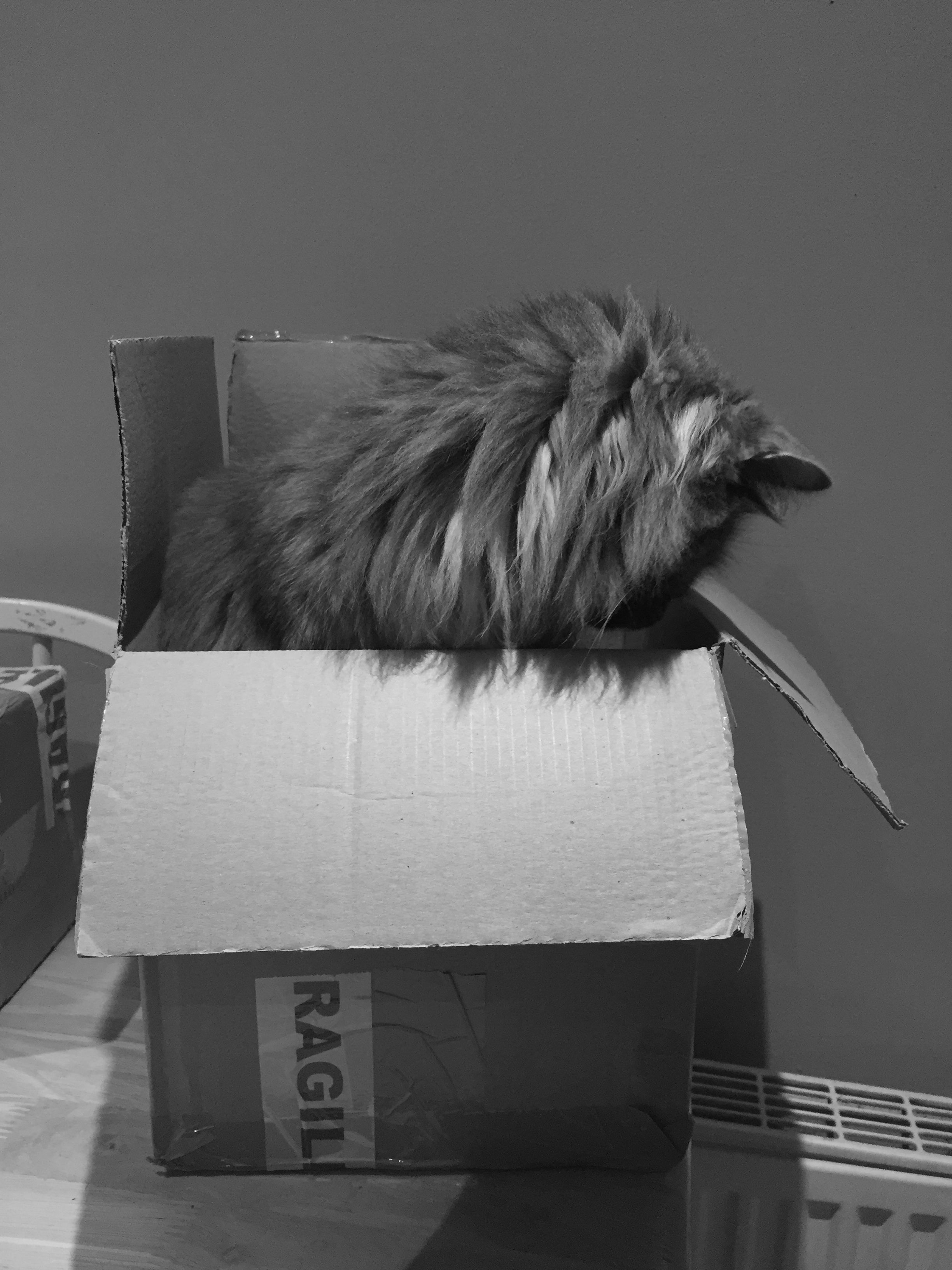 If I fits, I sits :) Luna loves 'helping' me pack.