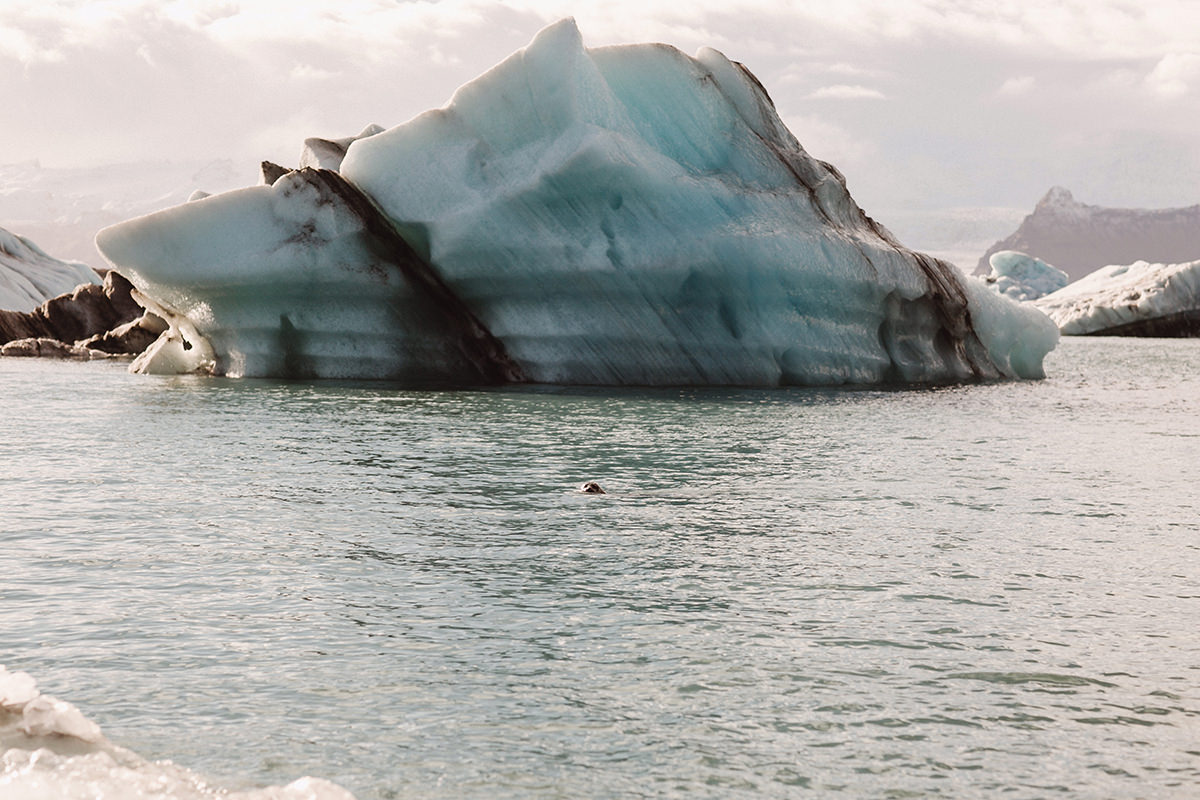 Iceland photographer elopement Jökulsárlón Glacier Lagoon Iceberg Black Diamond Beach Ice Ice Cave Seals Vatnajökull National Park Svartifoss Waterfall Wedding Destination Eloping elope photoshoot marriage icelandic Vik Skogafoss9.jpg