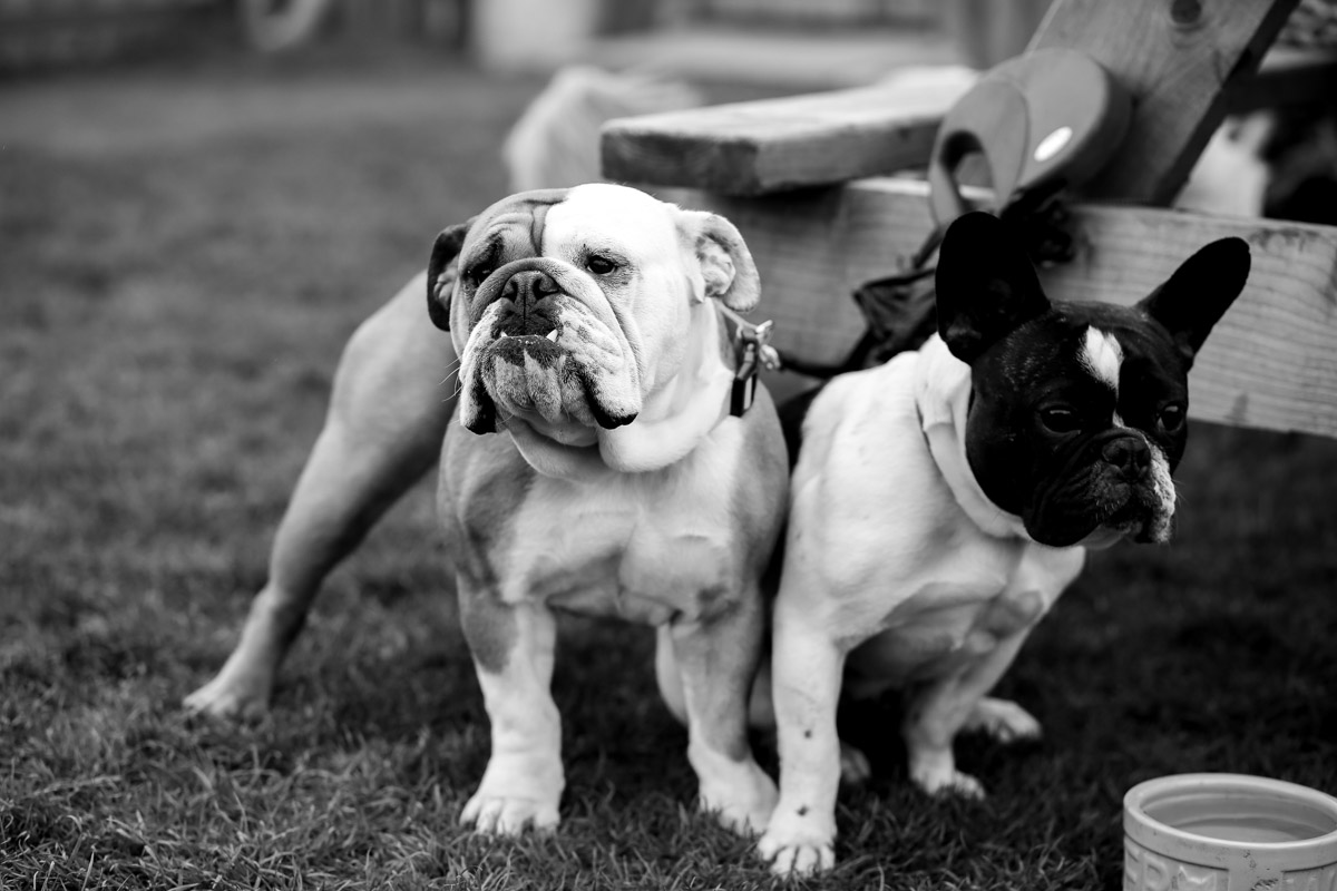 Bulldogs in Royden Park up in Wirral