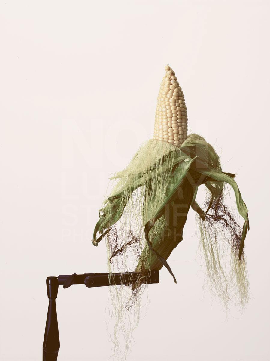 080214_corn-61319.jpg