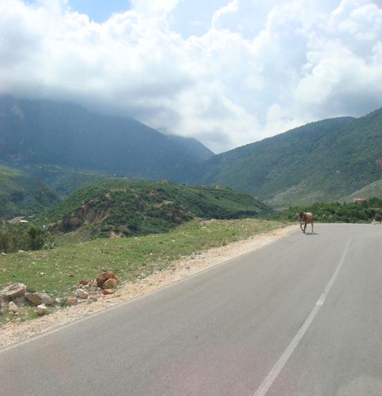 Pic: Albanian hazard - donkey on the road