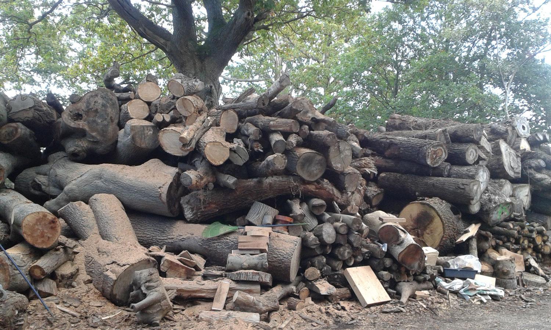 Oak-cases-before.jpg