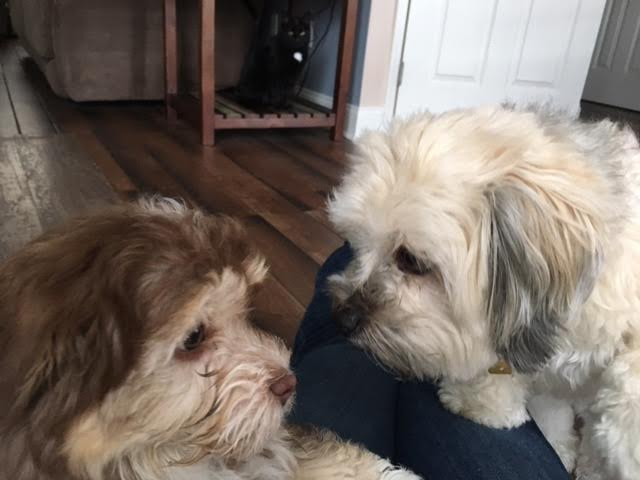 Chip meeting his new sibling Coco