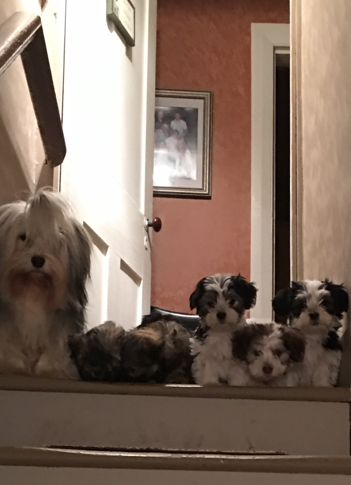 pupsstairs.PNG