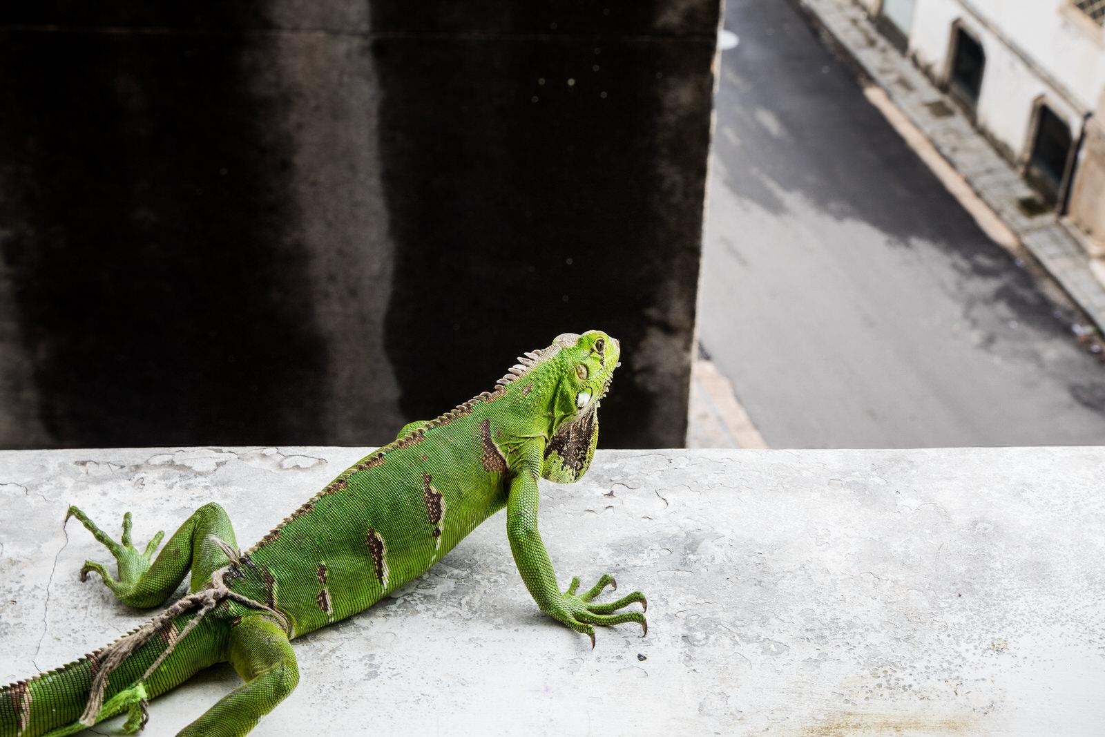 A resident of Ocupação Luísa Mahin looks out onto the streets below.