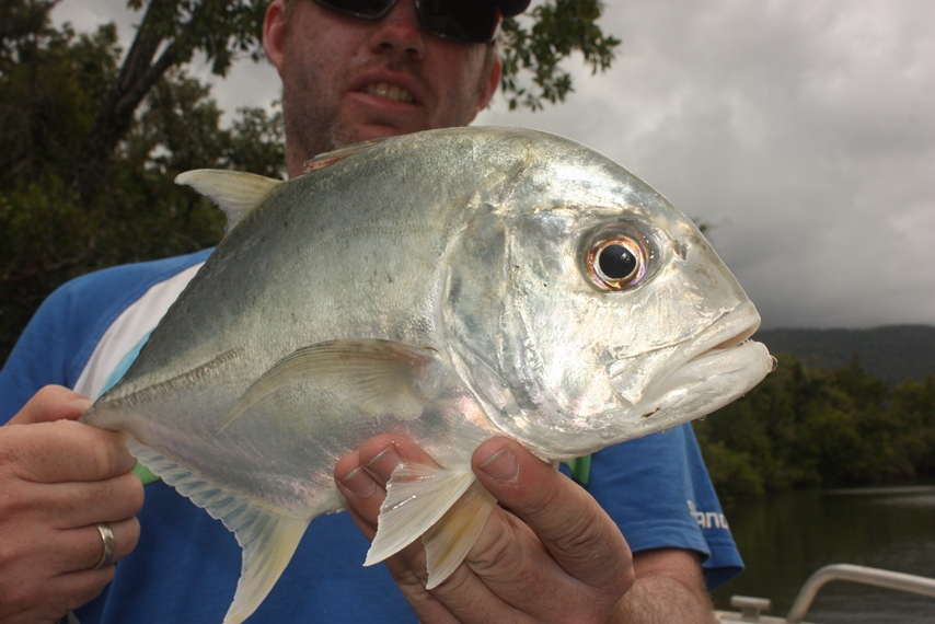 Fish fresh from the water, like this trevally, have clear eyes – an important thing to look for when buying seafood