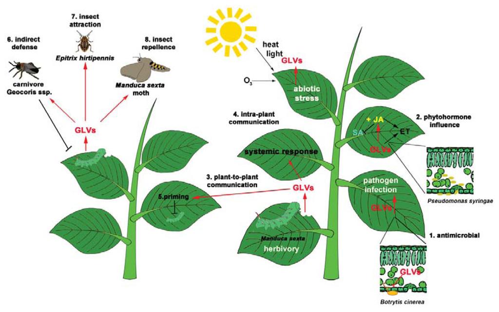 Green Leaf Volatiles, Scala et al, 2013