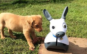 MiRo as your next household pet?