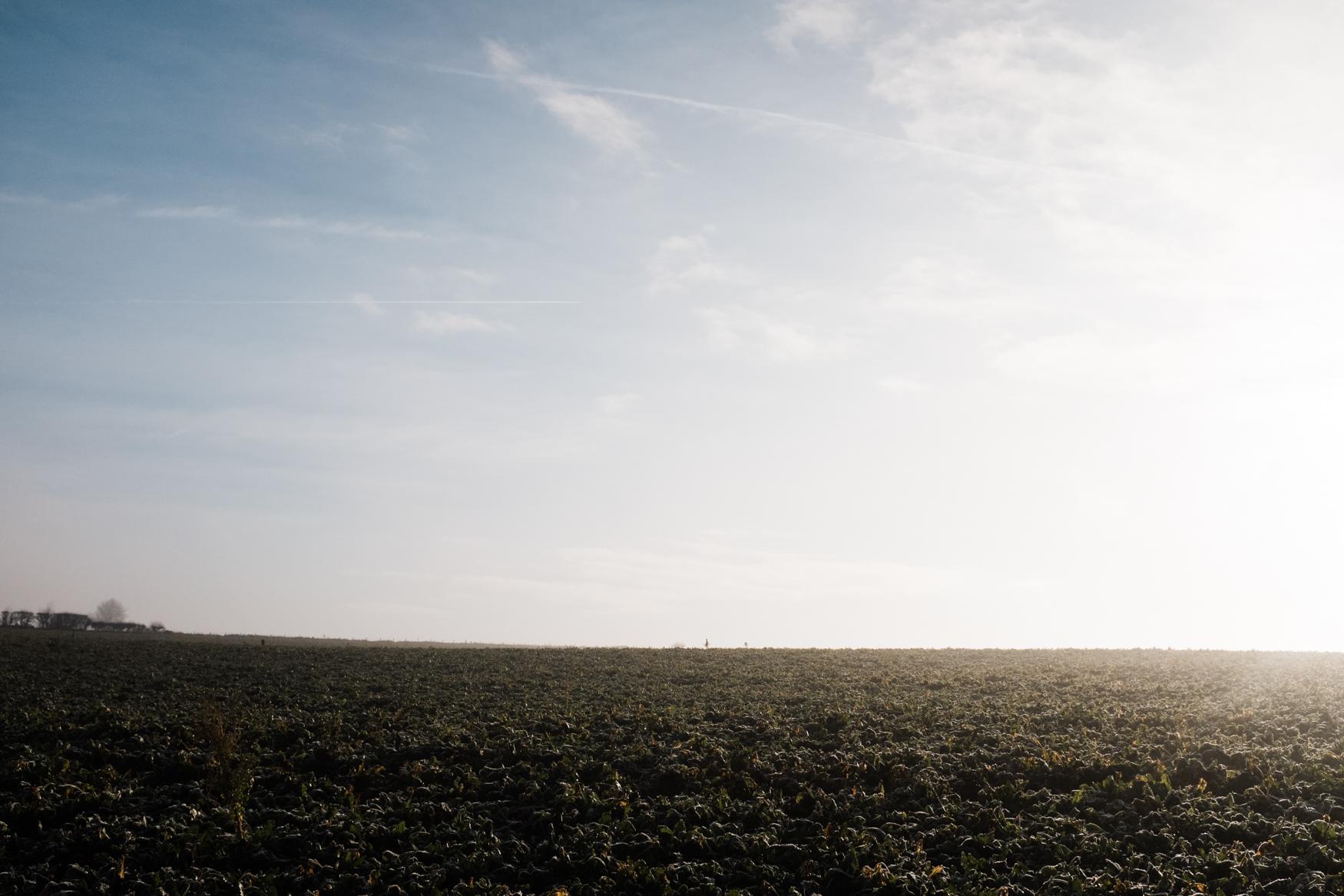 Alex-Sedgmond-Photography-Cardiff-Wales-Forbesfield-Florist-Cardiff-Rosedew-Farm-Flower-School-FFS-3.JPG