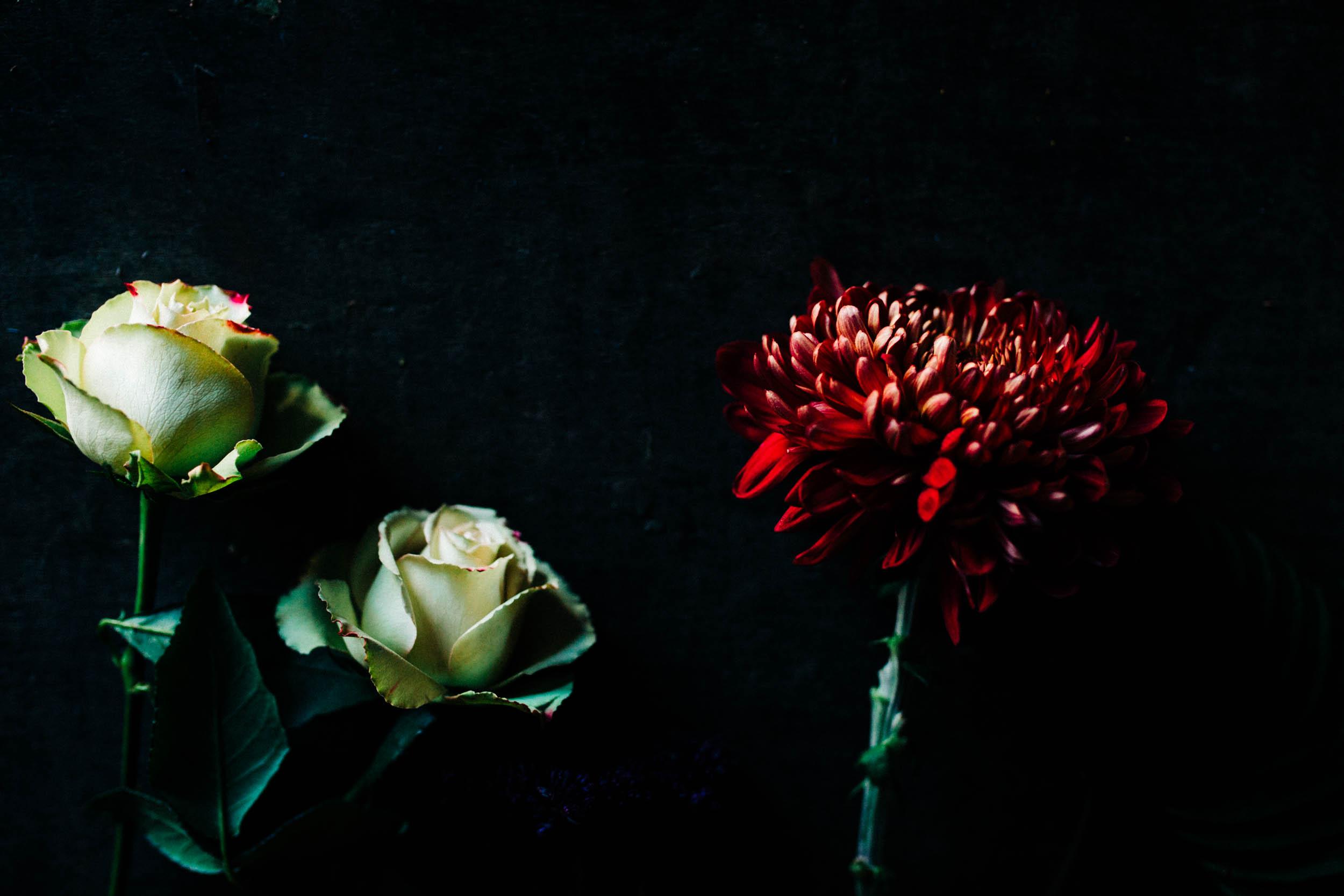 Alex_Sedgmond_Photography-Forbesfield-Cardiff_SouthWales.jpg