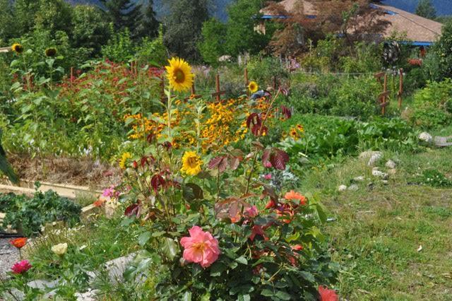 lush garden.jpg