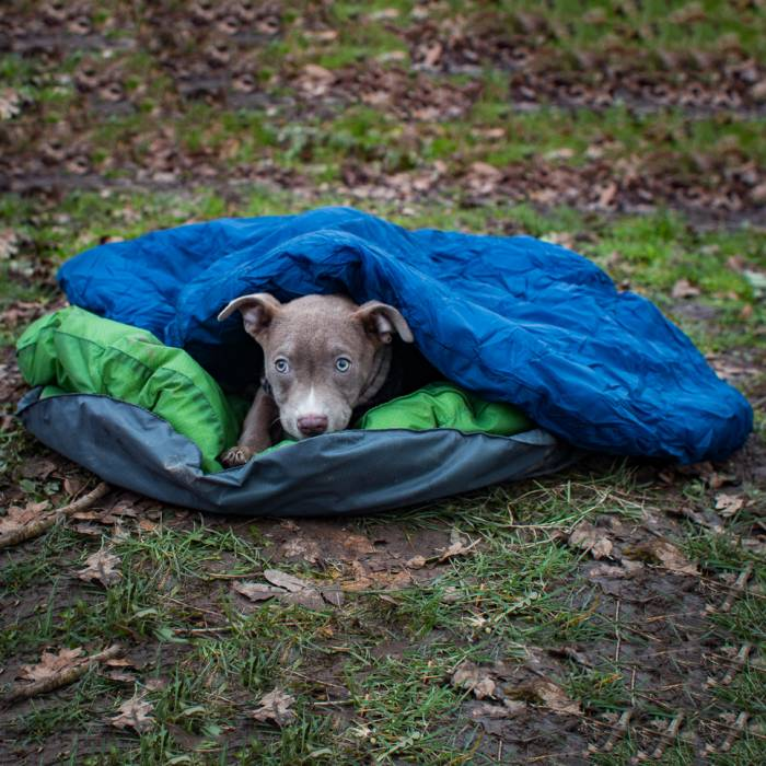 dog-sleeping-bag-700x700.jpg