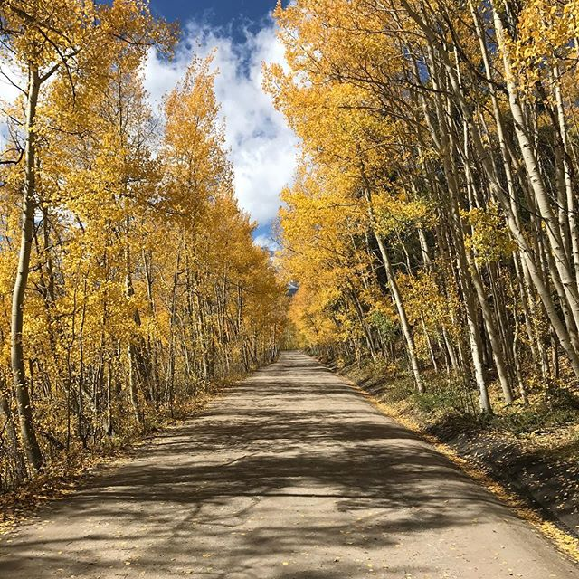 Follow along the yellow brick road #adventure #explore #fall
