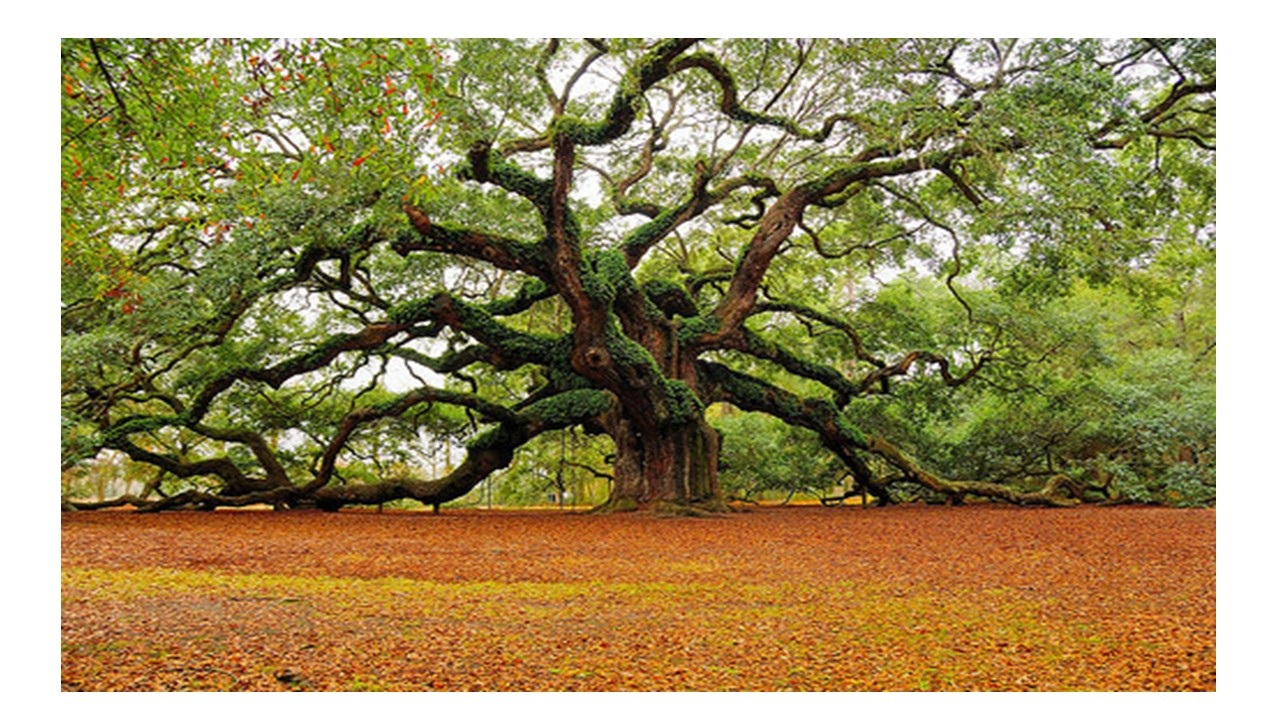 Many branches, deep roots.