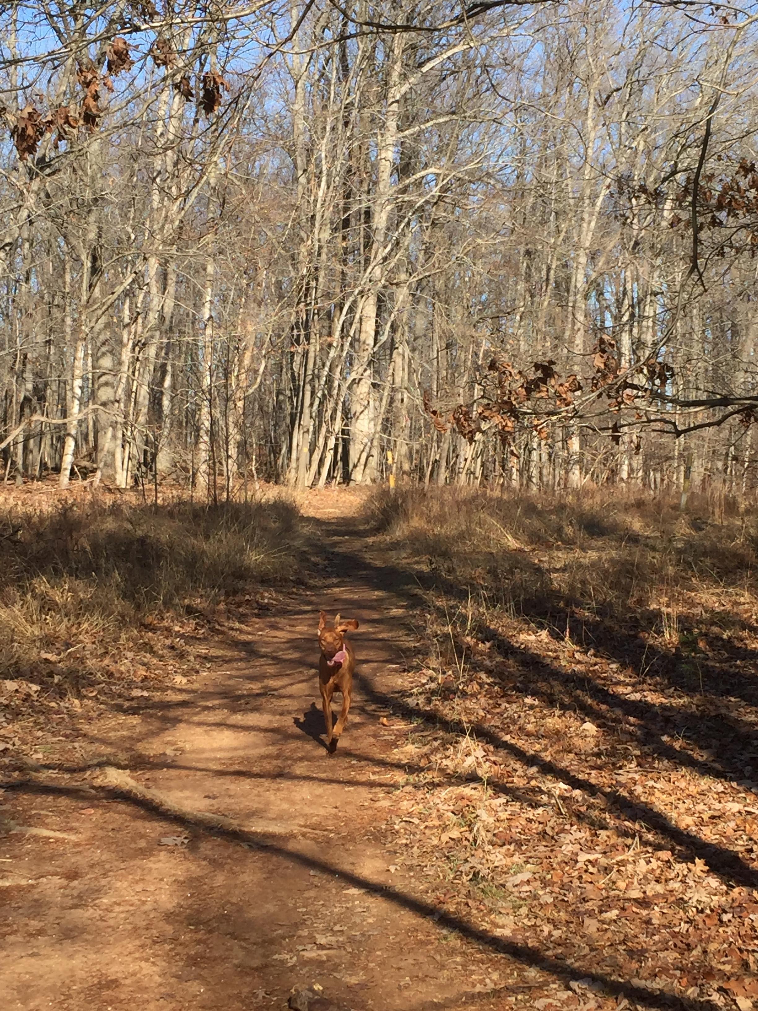 My trail running buddy
