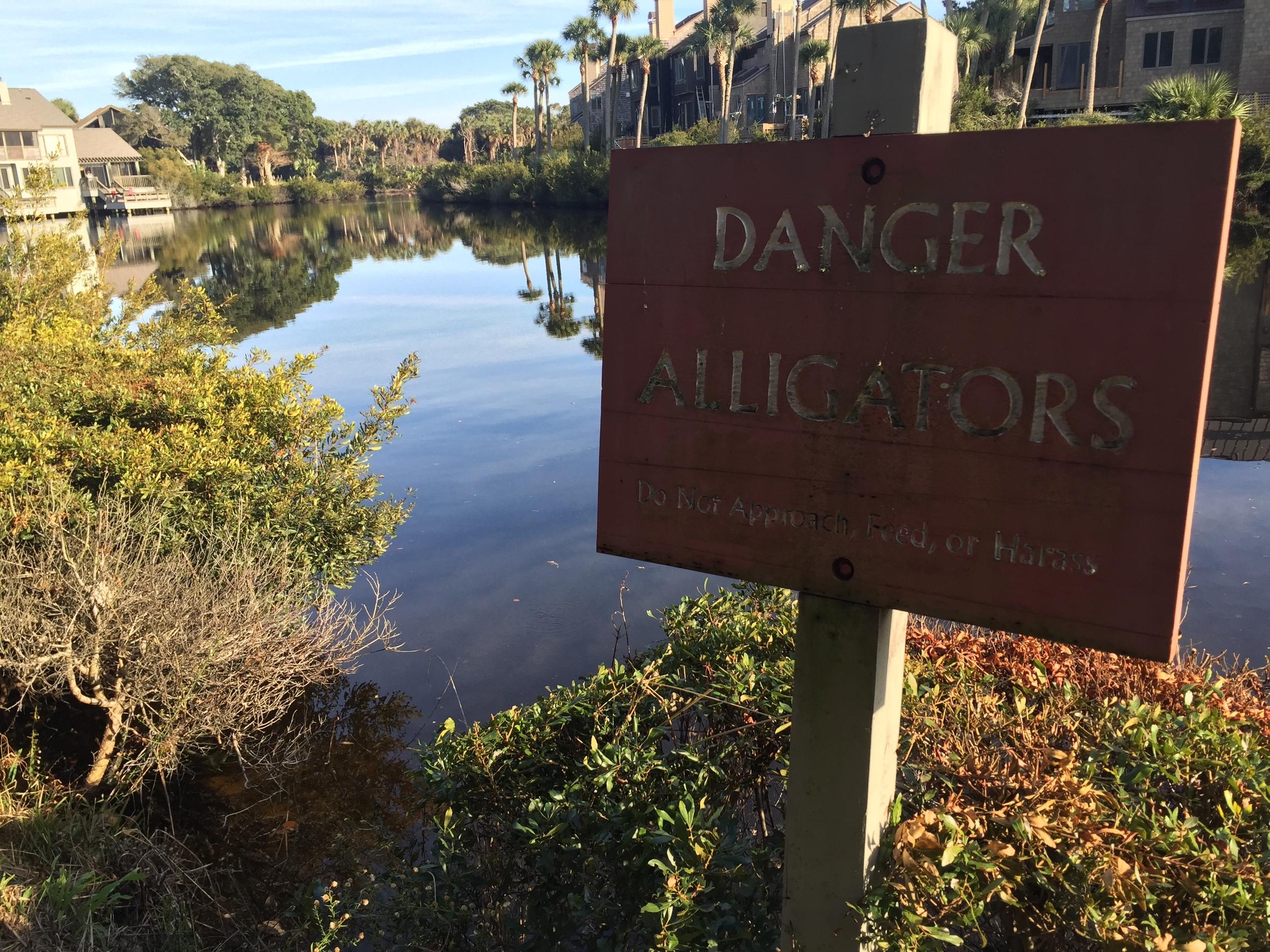 Don't harass the alligators... check.