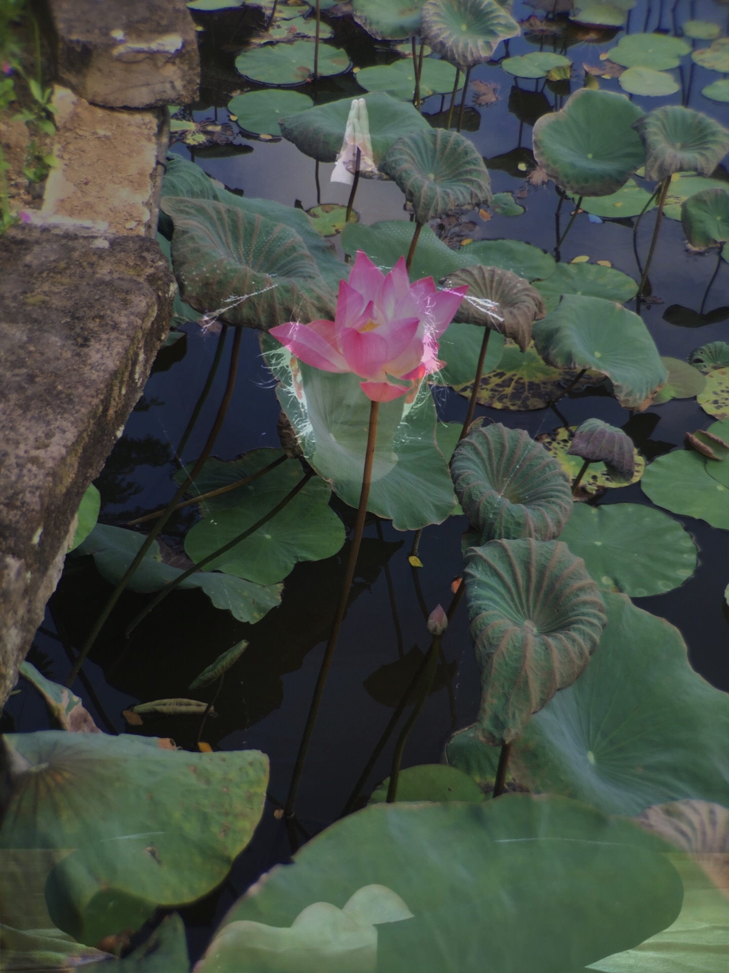 Credit: Mine. Lotus in Ubud, Bali, and me, by Federico Garcia C.