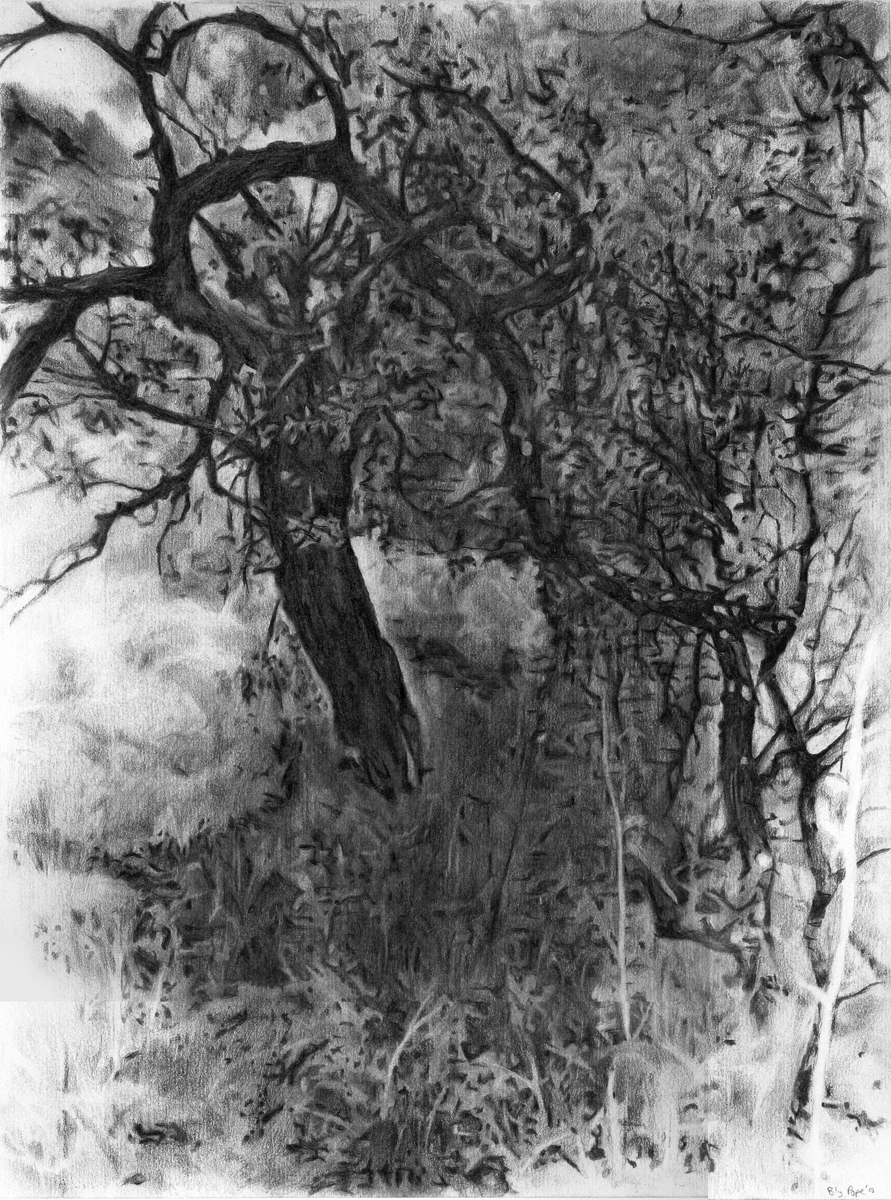 """Tree Swamp, pencil, 14"""" x 11"""" - by Bly Pope"""