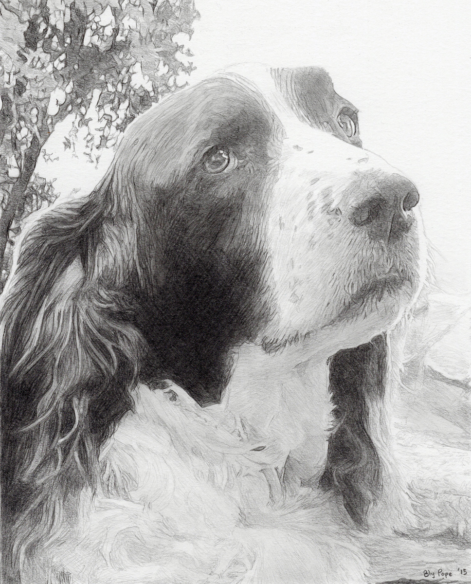 """Anne's Dog, pencil, 8"""" x 6"""" - by Bly Pope"""
