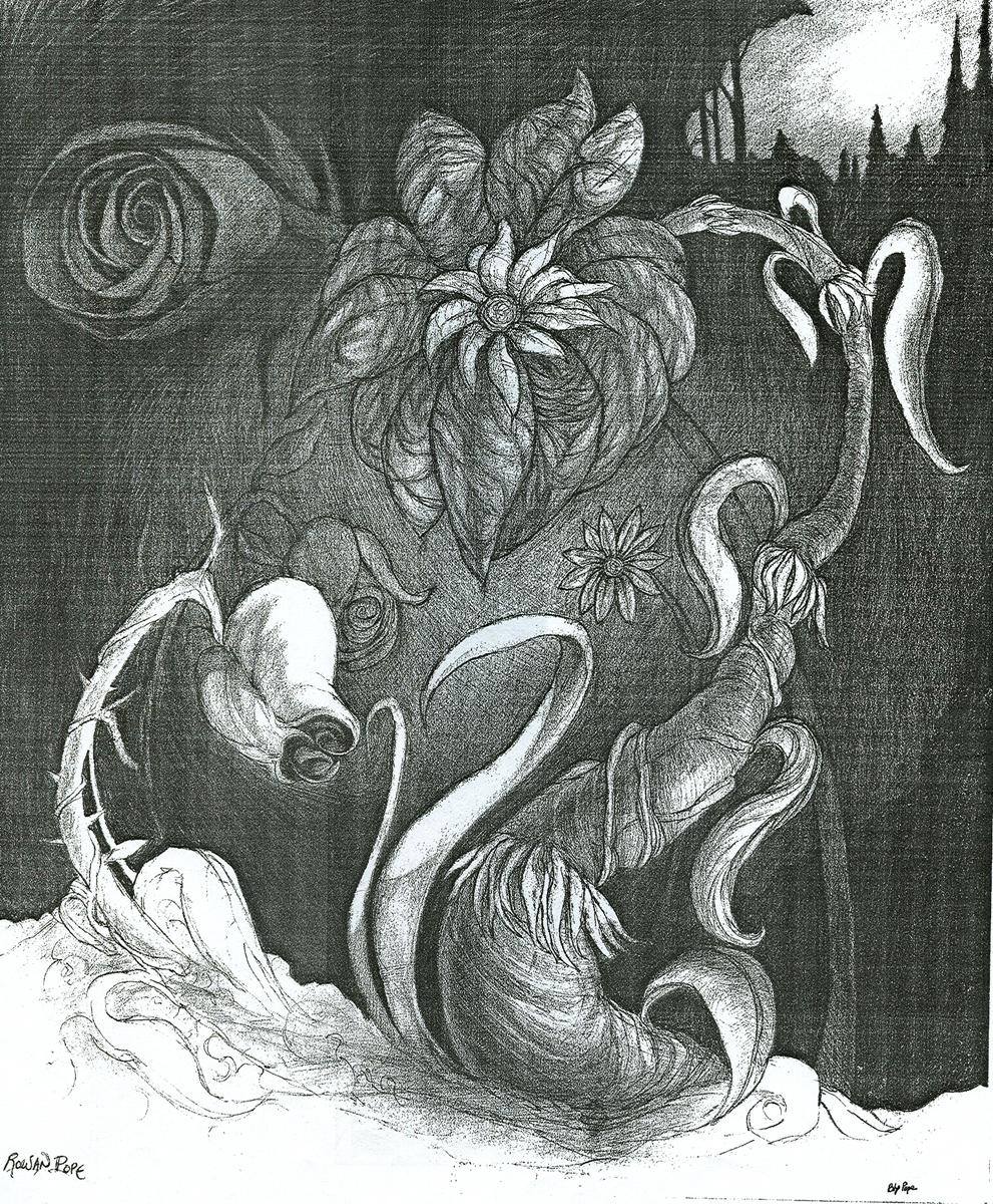 "Dark Flower, pencil, 14"" x 11"" - Bly and Rowan Pope"