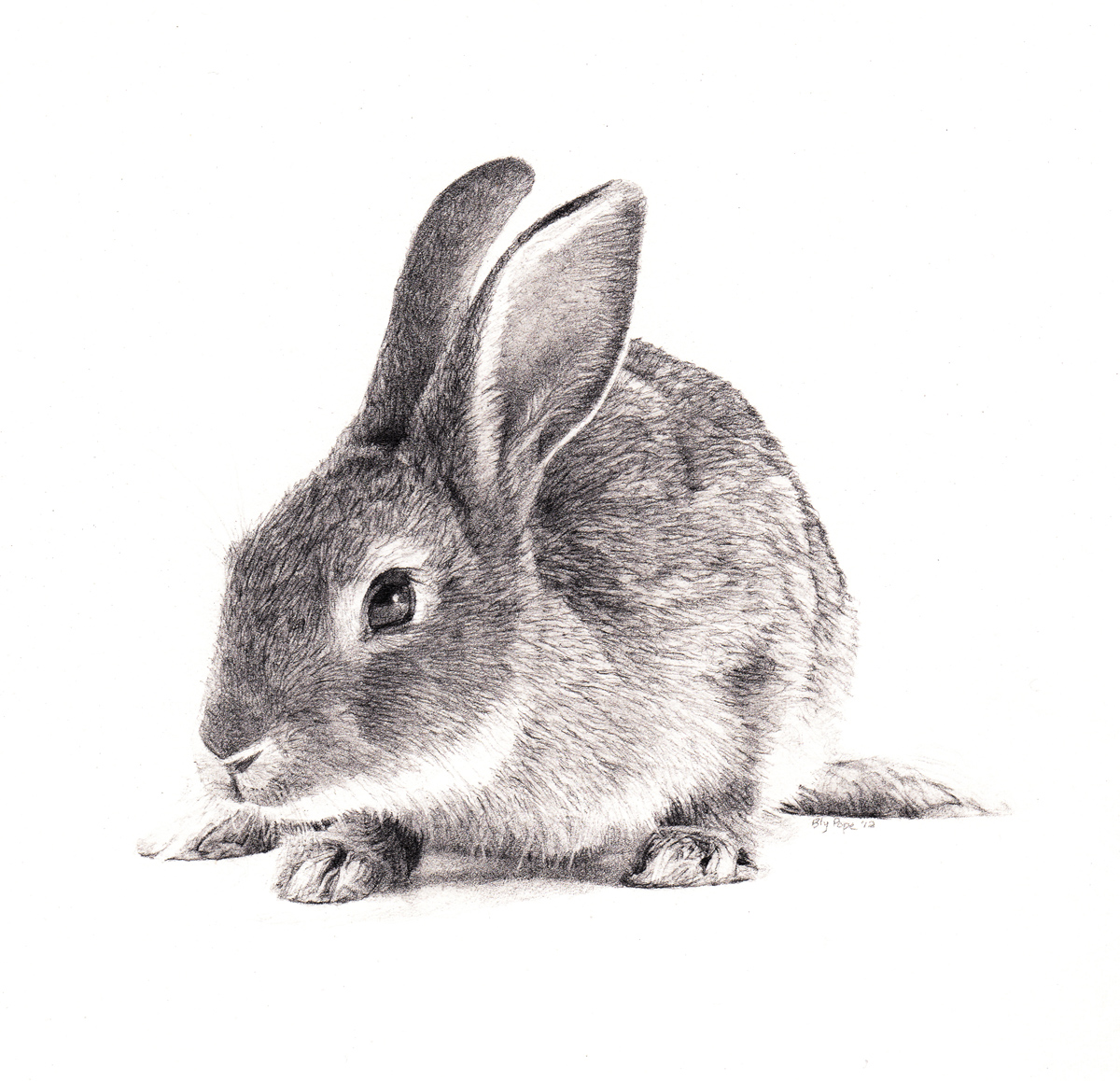"""Rabbit, pencil, 4"""" x 4"""" - by Bly Pope"""