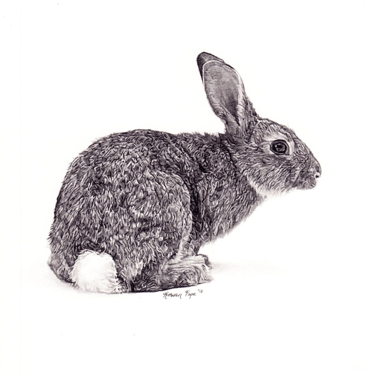 "Rabbit, pencil, 4"" x 4"" - by Rowan Pope"