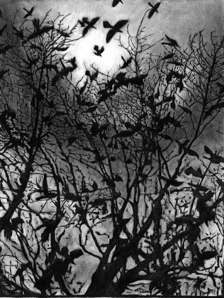 """Crows, pencil, 12"""" x 11"""" - by Bly Pope"""