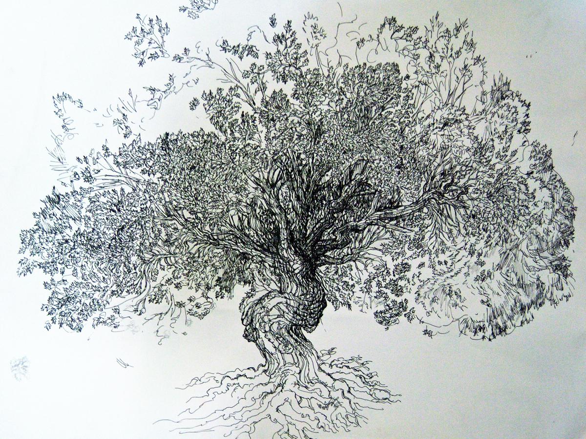 """Tree, pen, 13"""" x 18"""" - by Rowan Pope"""