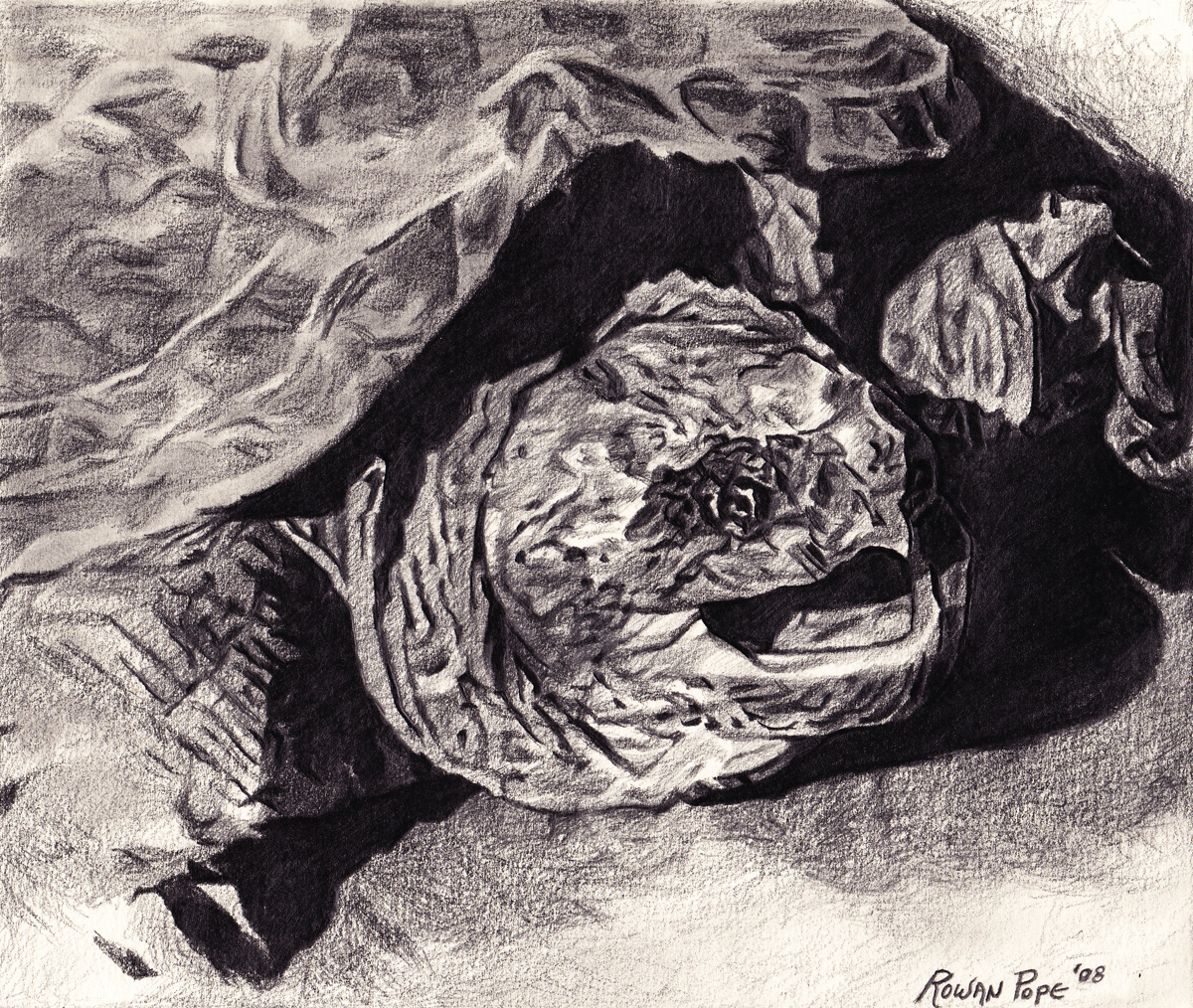 """Snapping Turtle, pencil, 5"""" x 7"""" - by Rowan Pope"""