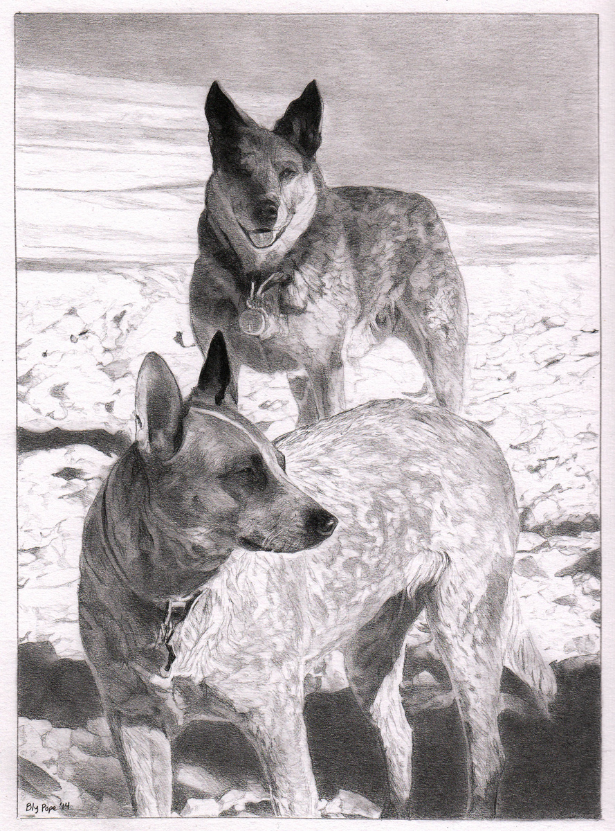 """Dogs in Snow, pencil, 8"""" x 6"""" - by Bly Pope"""