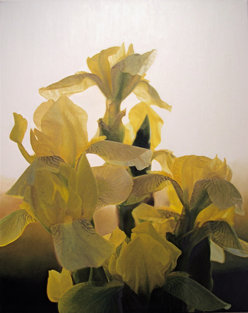 """Yellow Iris, oil, 30"""" x 24"""" - by Bly Pope"""