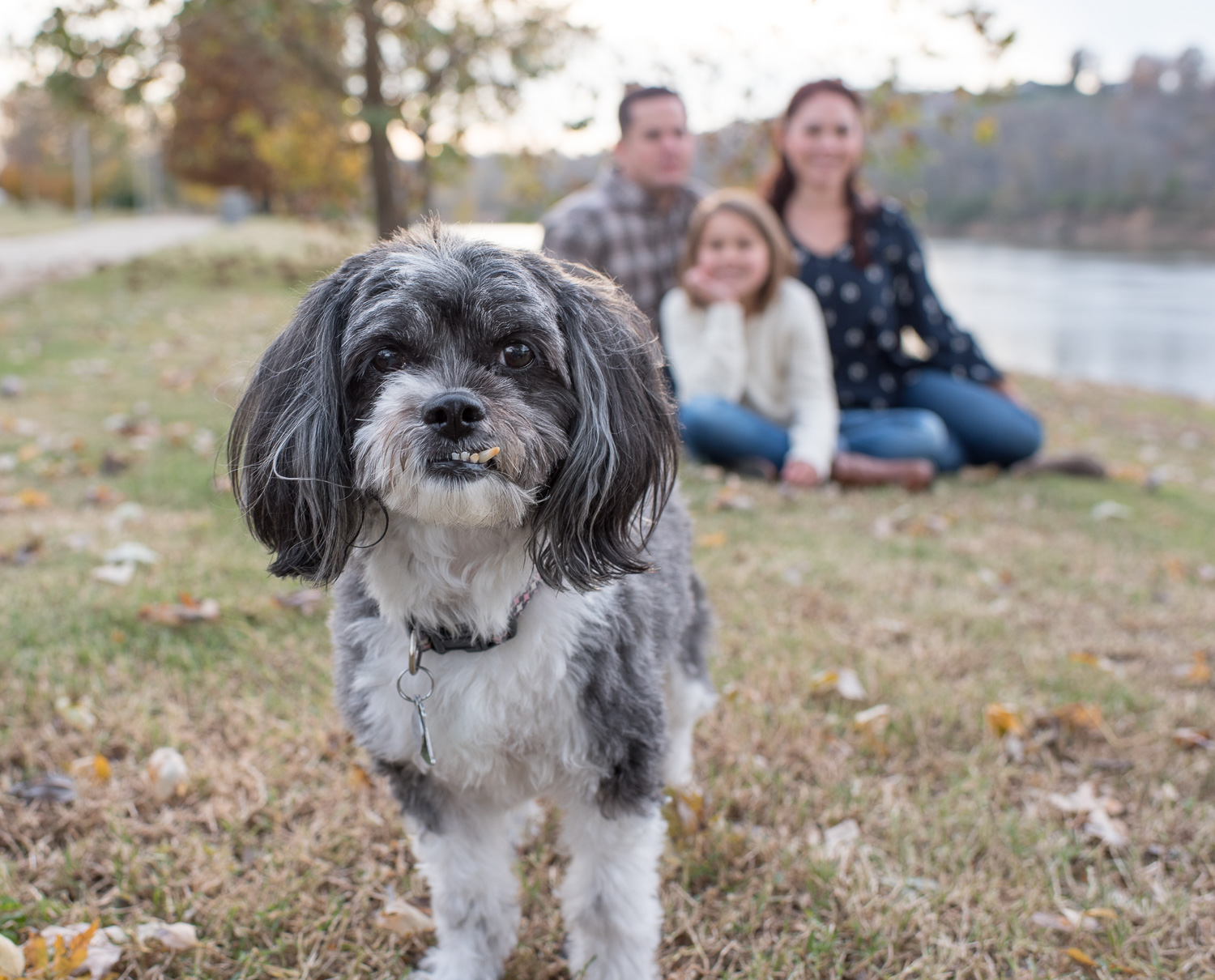 3 Tips for Taking Pictures with Your Pet - Clarksville TN Photographer