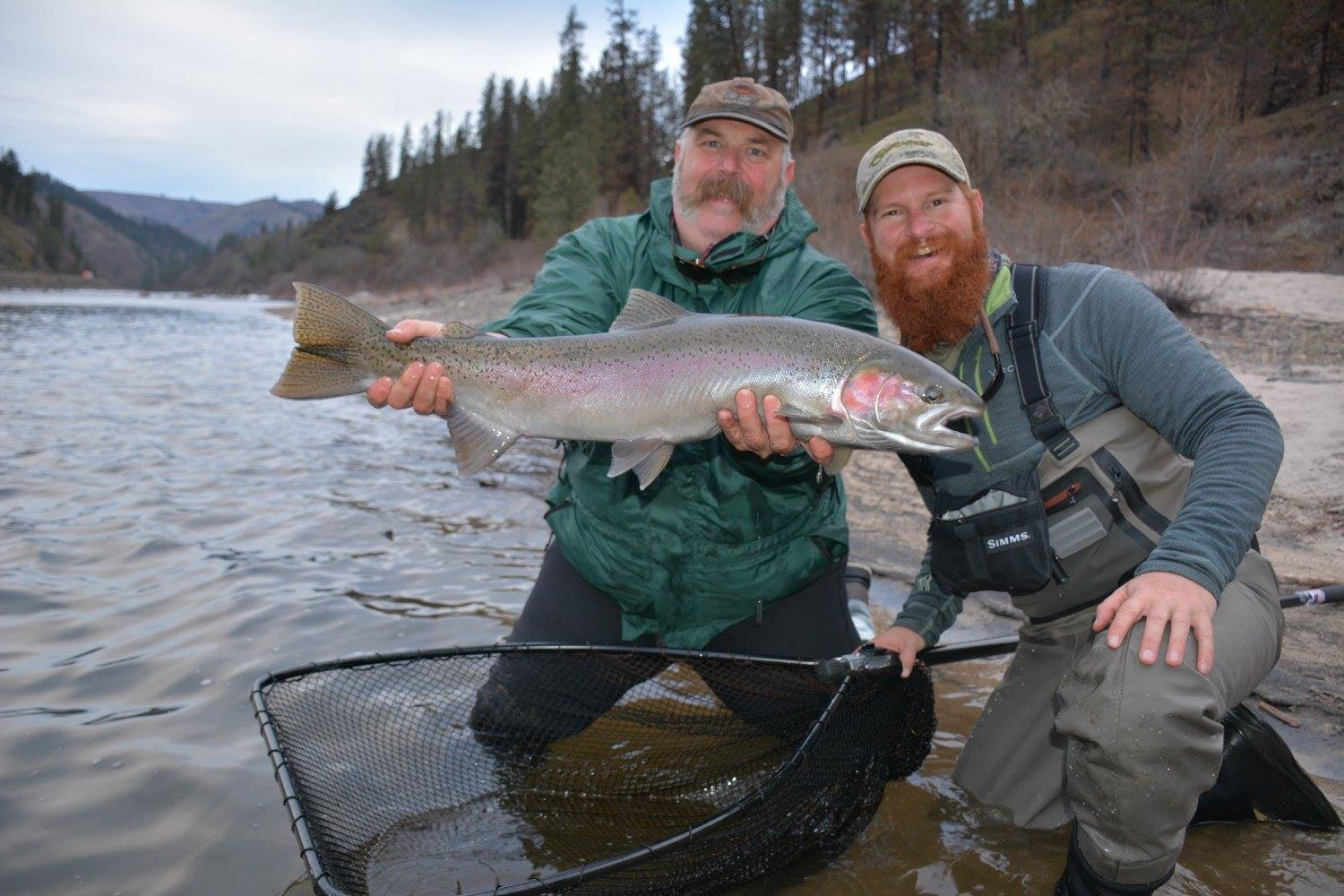 Fly caught steelhead