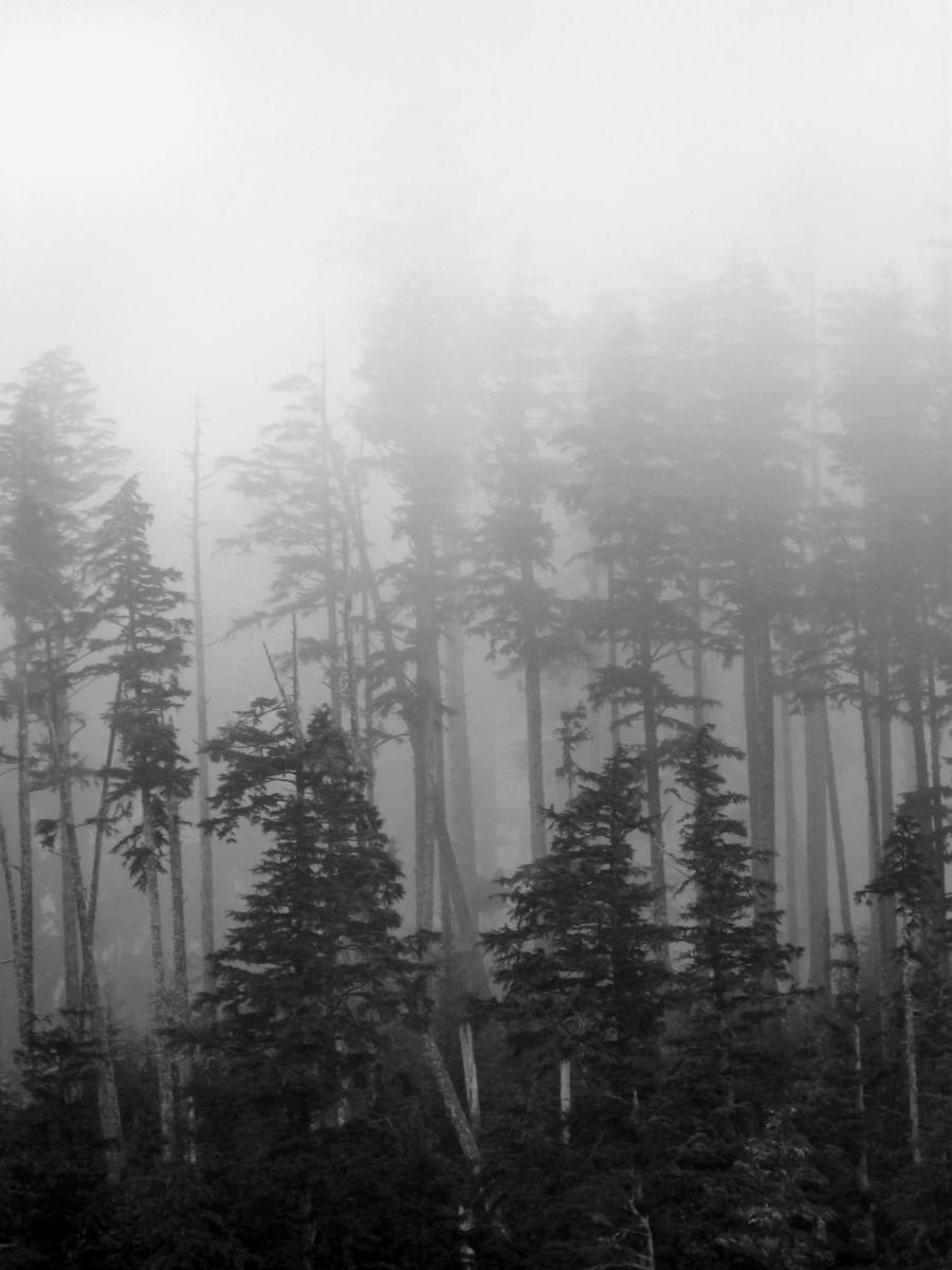 Chinook Smoke